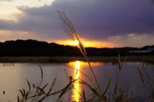 印旛沼写真(夕日)