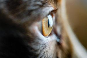 ペット写真(犬の瞳)